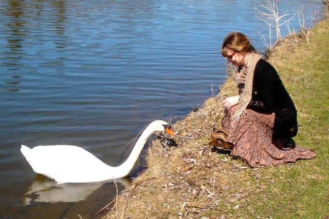 swan on the Avon