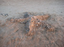 starfish sand sculpture