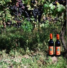 frogpond farm organic wine