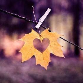 leaf with heart