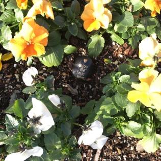 flowersandlittlerock
